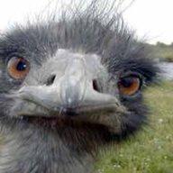 Birdnutz